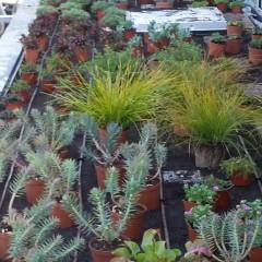 Plantació de la coberta vegetal