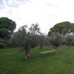 Camp d'oliveres 2021