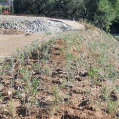 Plantacions de mida forestal