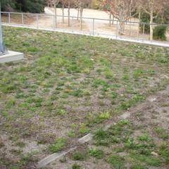 Plantació en coberta