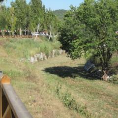 Riera de St. Cugat - primera germinació