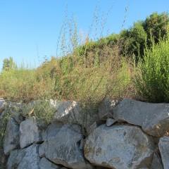 Riera de St. Cugat - salzes en escollera