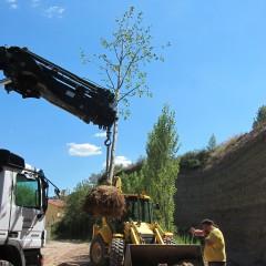 Preparació dels arbres a finals d'estiu